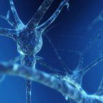 neurona1-1024×768